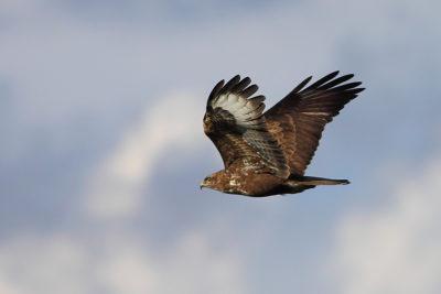 PTICE-UCCELLI-BIRDS –  ORDER/ Naroči