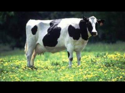 Na poti do igrišča srečaš klovne, krave in krone-za 11 glasbil